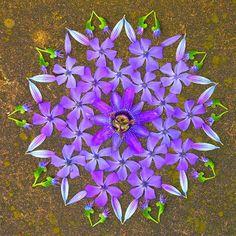flower-designrulz (14)