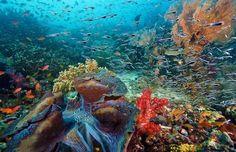 Raja Ampat Islands, Indonesia #PINdonesia
