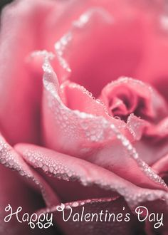 The 20 Best Flower Pictures That Will Inspire You Pink rose close up flower photography Cute Girl Wallpaper, Cute Wallpaper For Phone, Rose Wallpaper, Iphone Wallpaper, Pretty Backgrounds For Iphone, Cute Wallpaper Backgrounds, Cute Wallpapers, Cute Backgrounds For Girls, Vintage Backgrounds