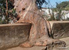 A liquid tree! Or did it just melt?