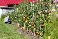 Sun, Culture, Plant, Lawn And Garden
