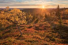 Autumn in Lapland - Somehow, this season in the North of Finland doesn't have a word in any other language, but we call it 'ruska'. Where To Go, Nostalgia, Country Roads, Seasons, Landscape, Fall, Autumn, Nature, Photography