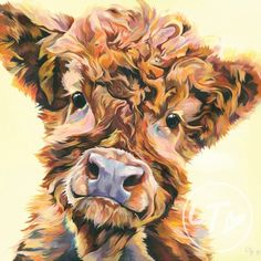 Highland Cow Cards 8 pack
