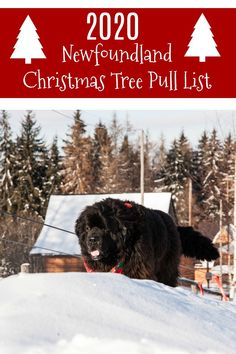 Newfies are known for pulling carts and this holiday season they will be bringing smiles by hauling Christmas trees at various tree farms in Ohio, Pennsylvania and Wisconsin Event Page, Christmas Tree Farm, Make A Donation, Newfoundland, All Dogs, Dog Love, Wisconsin, Your Dog, The Past