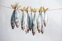 Fishy Still Life - James Hughes Still Life Photography, Art Photography, Dead Fish, Kunst Poster, Fish Art, Sea Creatures, Food Pictures, Art Inspo, New Art