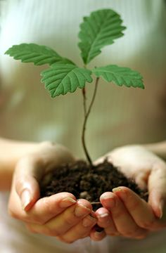 Ozone Depletion Will Affect Global Plant Life Sustainable Farming, Sustainability, Sustainable Living, No Till Farming, Noni Fruit, Tree Seedlings, Arbour Day, Hibiscus Flowers, Spring