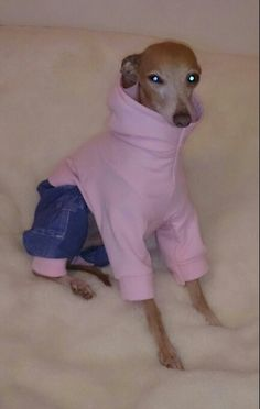 Chillin in my jeans and hoody. Handmade by Kcls dog design  check us out on fb