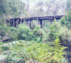 Old railway bridge built in 1890 #oldbridge #fernyforest
