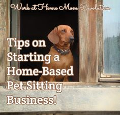 Tips on Starting a Home-Based Pet Sitting Business! / Work at Home Mom Revolution Pet Sitting Business, Starting A Daycare, Pet Boarding, Animal Boarding, Hilario, Busy At Work, Dog Daycare, Daycare Ideas, Pet Care Tips