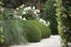 Boxwood, grasses & roses | Peter Fudge