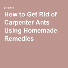 Home Ants And Home Remedies On Pinterest