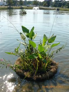 Diy Floating Islands For Your Pond Gardening And 400 x 300