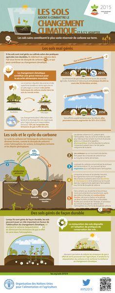 Les sols aident à combattre le changement climatique et à s'y adapter
