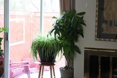 A tour of Elspeth & Blake's house plants. Foliage Plants, All Plants, Types Of Plants, Window Plants, Garden Site, Plant Lighting, House Plant Care, Money Trees