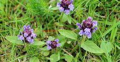 Natural Remedies, Flora, Nature, Paradis, Green, Therapy, Plant, Naturaleza, Plants
