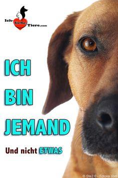Ich bin JEMAND und nicht ETWAS. >> http://www.ich-liebe-tiere.com/ <<