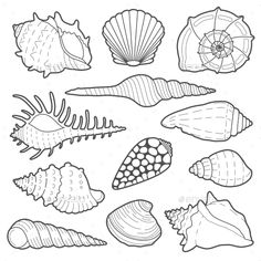 Buy Sea Shells Vector Icon Set by primulakat on GraphicRiver. Sea shells vector icon set isolated on a white background Drawing Reference, Line Drawing, Icon Set, Animal Drawings, Art Drawings, Sea Creatures Drawing, Shell Drawing, Shell Art, Rock Art