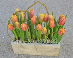 Hot Sale !100 PCS Rare Flower Seeds, Tulip Seeds,Indoor Flower Absorb Radiation Natural growth,Bonsai Pot For Home Garden