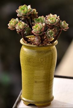 Container Gardening Ideas For The Many Different Garden Pots - Gardening Container Gardening Vegetables, Succulents In Containers, Container Flowers, Container Plants, Vegetable Gardening, Growing Succulents, Cacti And Succulents, Planting Succulents, Planting Flowers