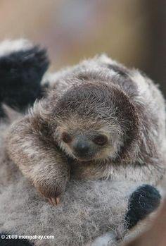 I <3 sloths