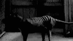 animalsnatureveganism: Extinct... - Curvy Girls & Nerdy Stuff