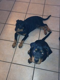 Mine to dejlige hunde