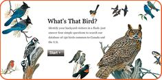 """Be sure to check out the National Geographic's """"What's That Bird?""""interactive bird identification search. The site will ask your STEMists to answer four simple questions. #STEM #birding #birdwatching"""