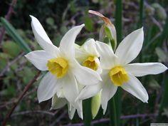 ilkbahar çiçekleri - Google'da Ara