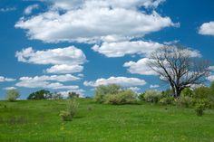 https://flic.kr/p/HppkcW | Spring Meadow - Maybury State Park, Northville, MI, May, 2016 | NAP_Canon EOS 5D Mark III_20160519__L5C5843_0011-Edit.tif