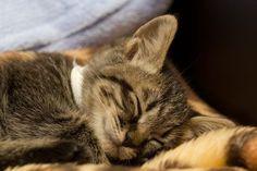 ねこ 猫 動物 かわいい