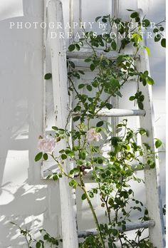 I am so going to do this to stabilize my roses. Not such an I sore as I have going on now. So cute for the side of my house, now to find a ladder