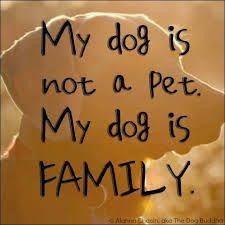 Η   ΕΦΗΜΕΡΙΔΑ   ΤΩΝ    ΣΚΥΛΩΝ: Τι είναι ο σκύλος μου