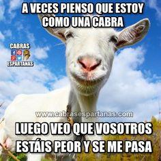 Estar como una cabra tampoco es tan malo