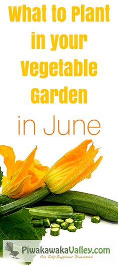 How do you what to plant in your vegetable garden in June? Gardening information sure can get a bit confusing at times!  You may get a book to follow along with what to plant in the garden week by week. But unless it is written for your specific area, you