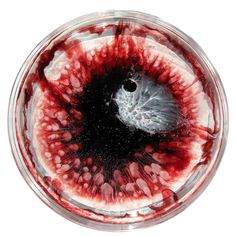 Petri Dish Paintings For Every Day Of 2013 Design Innovation, Business Innovation, Growth And Decay, Bio Art, Petri Dish, Futuristic Art, A Level Art, Science Art, Resin Art