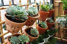 Jardim vertical em varanda de cobertura, em Pinheiros/SP. Plantas de sol pleno. Projeto e execução: Gradina Jardinagem e Paisagismo.