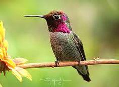 Resultado de imagen para cabezas de colibri