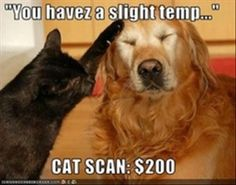 Cat scans are expensive, hope my pet insurance covers it. . .