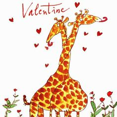 St Valentine's day card illustrated by Quentin Blake and illustrated with two inter-twined giraffes