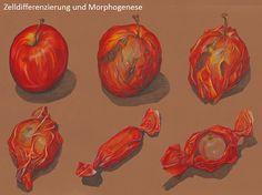 Naturwunder ...: Zelldifferenzierung und Morphogenese