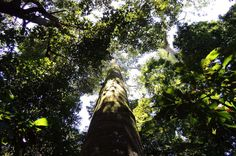 manuel antonio national park canopy    - Costa Rica