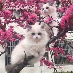 Cute kittens on a pink tree ♥ Cute Kittens, Kittens Cutest Baby, Gatos Ragdoll, Gatos Cats, Ragdoll Kittens, Bengal Cats, Pretty Cats, Beautiful Cats, Animals Beautiful