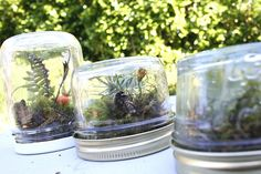 44 Beautiful Diy Mason Jar Terrarium Ideas - If you have any special skills, do-it-yourself (DIY) is the way to go for your wedding. Most people attempting DIY projects for their wedding will onl. Mason Jar Terrarium, Mason Jars, Bottles And Jars, Glass Jars, Mini Terrarium, Hanging Terrarium, Baby Food Jar Crafts, Baby Food Jars, Crafts For Kids