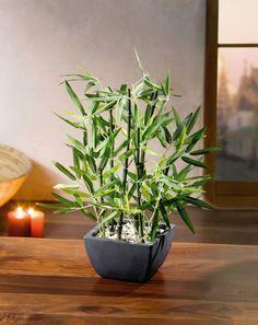 Lovely Deko Bambus im Topf jetzt f r uac kaufen im Frank Flechtwaren und
