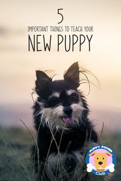 Here are the most important things you need to know to teach your new puppy. Having a puppy can be overwhelming you need to teach it to sit, stay and other commands here are the most crucial things you need to know when training your puppy.