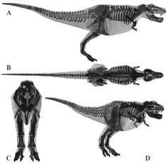 dinosaurios blueprints - Buscar con Google