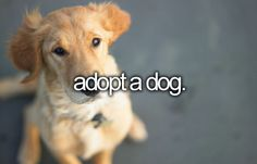 I already did this but I will keep adopting whenever I can, I would NEVER buy a dog from a breeder or pet store.