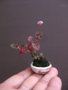 Hydroponics and Indoor Gardening Bonsai Tree Types, Indoor Bonsai Tree, Bonsai Plants, Moss Garden, Planting Succulents, Planting Flowers, Mini Bonsai, Ikebana, Tiny Flowers