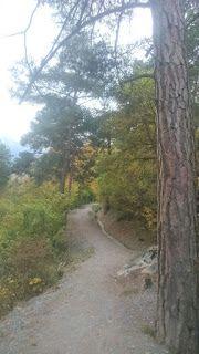 Blog über das Reisen und wandern. Zurzeit vorallem Wandern in der Schweiz. Fernziel ist der Fernwanderweg E1 Wallis, Outdoor, Plants, Blog, Switzerland, Hiking, Home, Travel, Outdoors