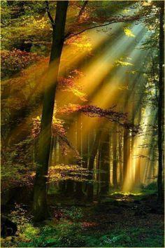 Gold sun rays, Schwarzwald. Germany
